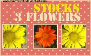 3_flowers_stocks by SunnyGirl33