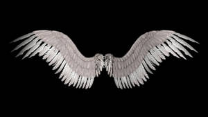 New Angel Wings