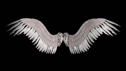 New Angel Wings