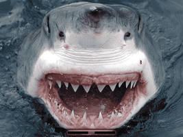 White Shark by klen70