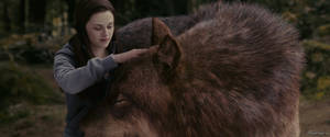Bella and the Wolf