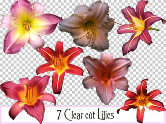 7 Clearcut Lilies