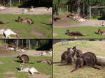Lazy Kangaroo Pack