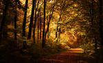 Lonely autumn walk Wallpaper