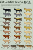 Cat Genetics Tutorial Part 7 (Color changes) by Spotted-Tabby-Cat