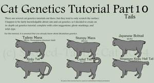 Cat Genetics Tutorial Part 10 (Tails)