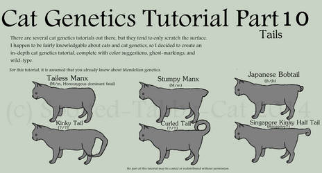 Cat Genetics Tutorial Part 10 (Tails)
