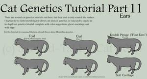 Cat Genetics Tutorial Part 11 (Ears)