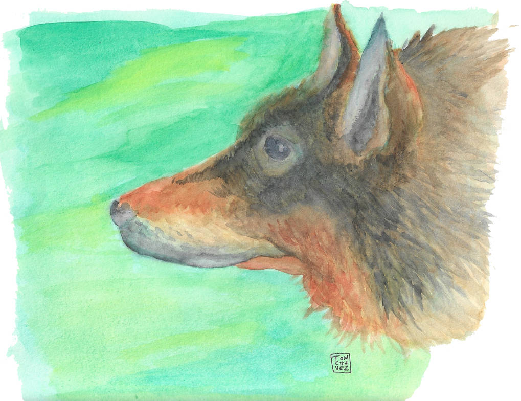 Wolfie Dog Woof Woof - Watercolor by Tombotvez on DeviantArt