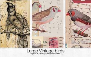 Large vintage birds by s3cretlady