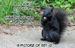 black squirell by gurukitty