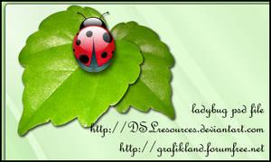 Ladybug PSD Pack