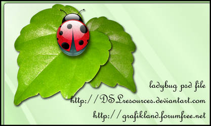 Ladybug PSD Pack by DSLresources