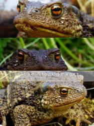 Prince Charming aka Toad Stock