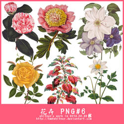 FLOWERS PNG