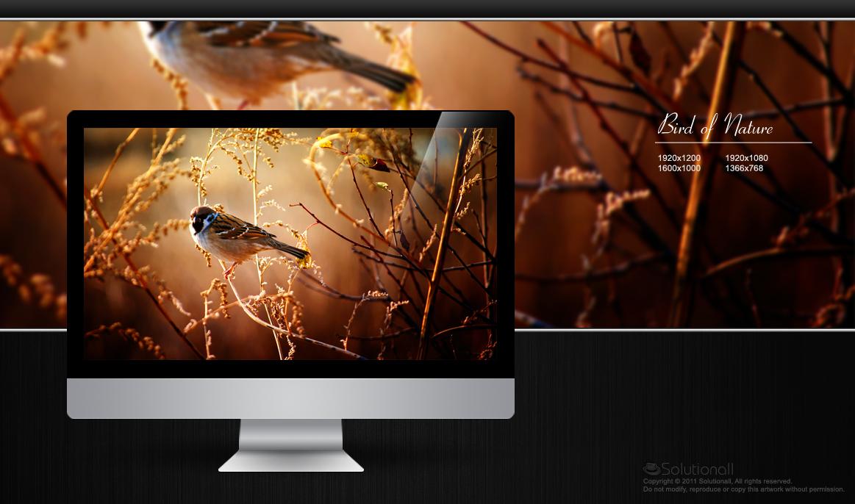 HD Wallpaper Nature Bird Updated