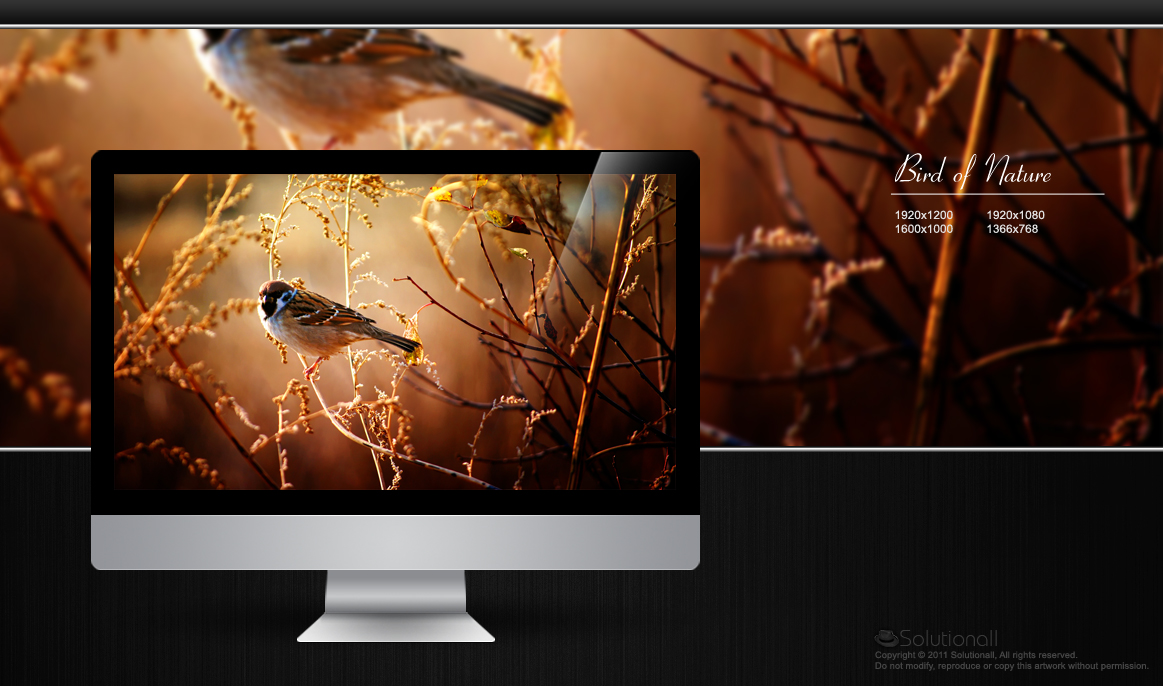 HD Wallpaper Nature Bird Updated by solutionall