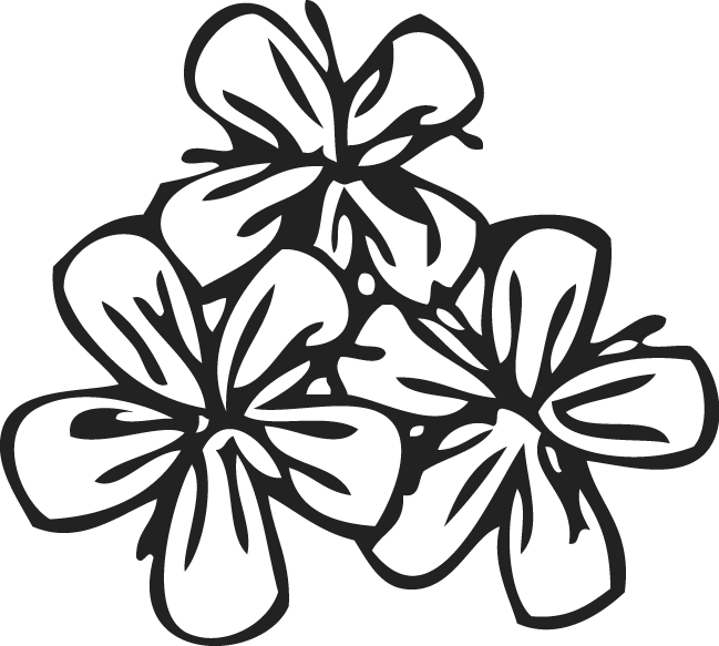 Flower Pattern Png Flower Pattern by Trudos