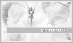 PS7 Brushes: Butterflies by SacredLies