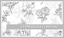 PS7 Brushes: Flower Sketches 4 by SacredLies