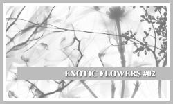 PS7 Brushes: Exotic Flowers 2