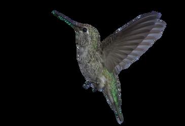 Hummingbird... Animation by Leocervas