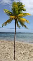 Palm_Tree_Stock_1