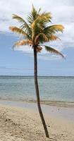 Palm_Tree_Stock_2
