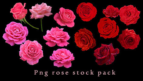 Png Rose Stock Pack