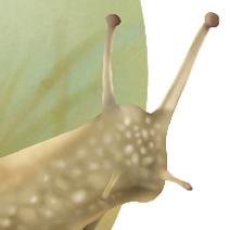 Snail. Healthy Spares' House by cristalreza
