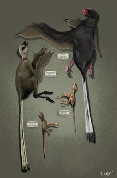 Life Size Scansoriopterygids