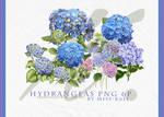 Hydrangeas Png