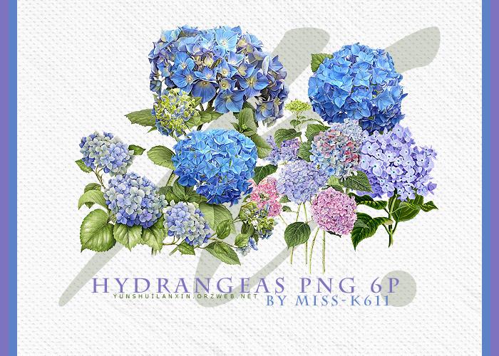 Hydrangeas Png by MISS-K611