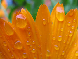Droplets by Michel8170
