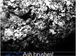 4 Ash brushes