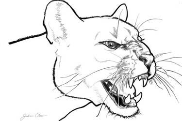 Puma concolor by juliolsson