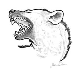 Yawning Hyena by juliolsson