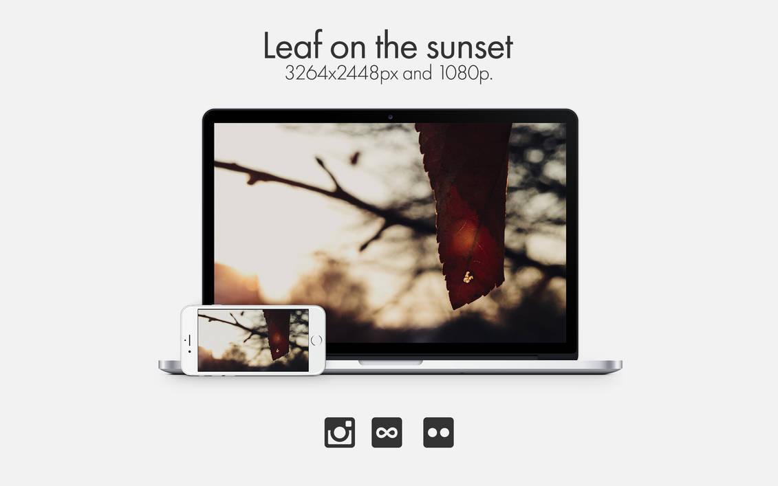 Leaf On The Sunset