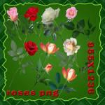 png rose