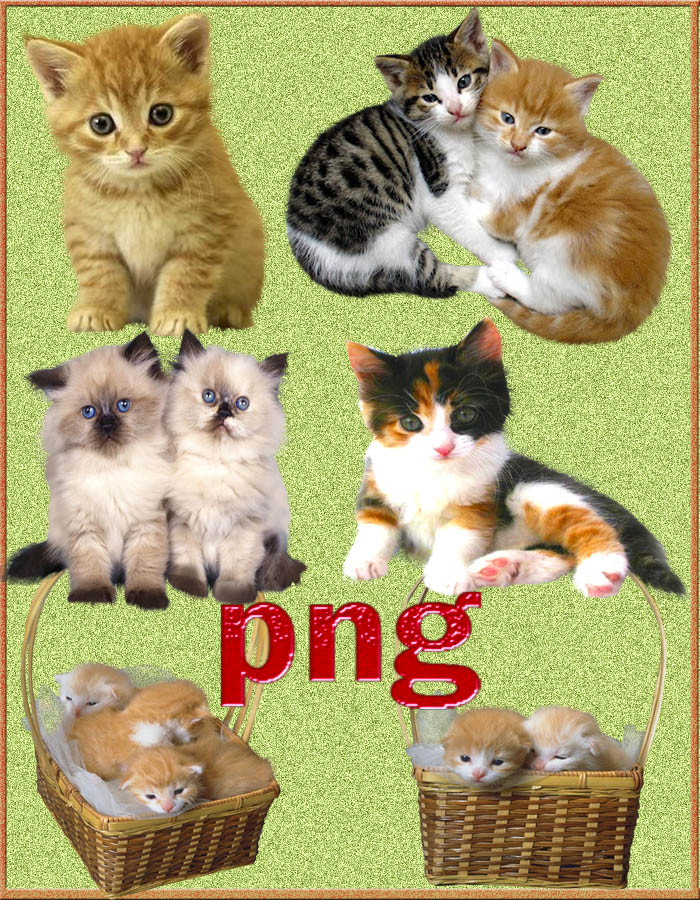 cats 1853 png