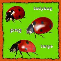 ladybug large by roula33