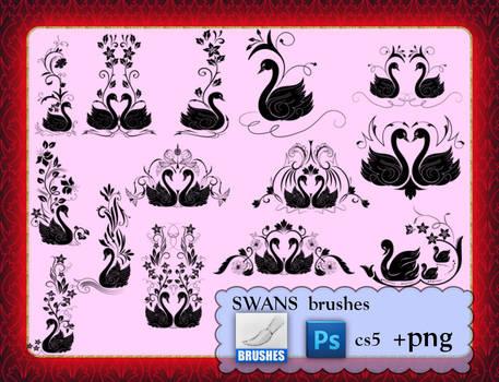 SWANS brushes