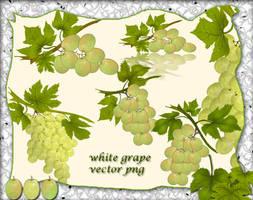 White Grape1