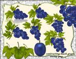 Contrasting Black Grape