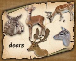 Deers 1 by roula33