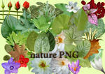 nature PNG