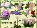 Flowers Png-2