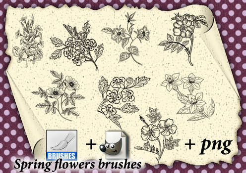 Spring flowers brushes  01