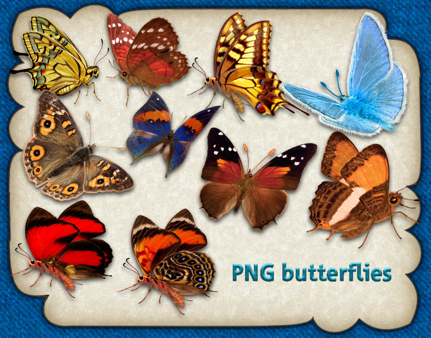 PNG butterflies by roula33