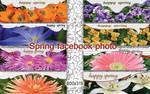 Spring facebook photo